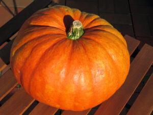 healthy pumpkin cream cheese muffins | pumpkin