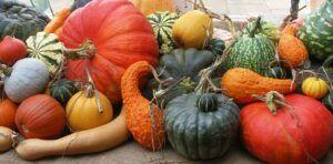 healthy pumpkin cream cheese muffins | squash
